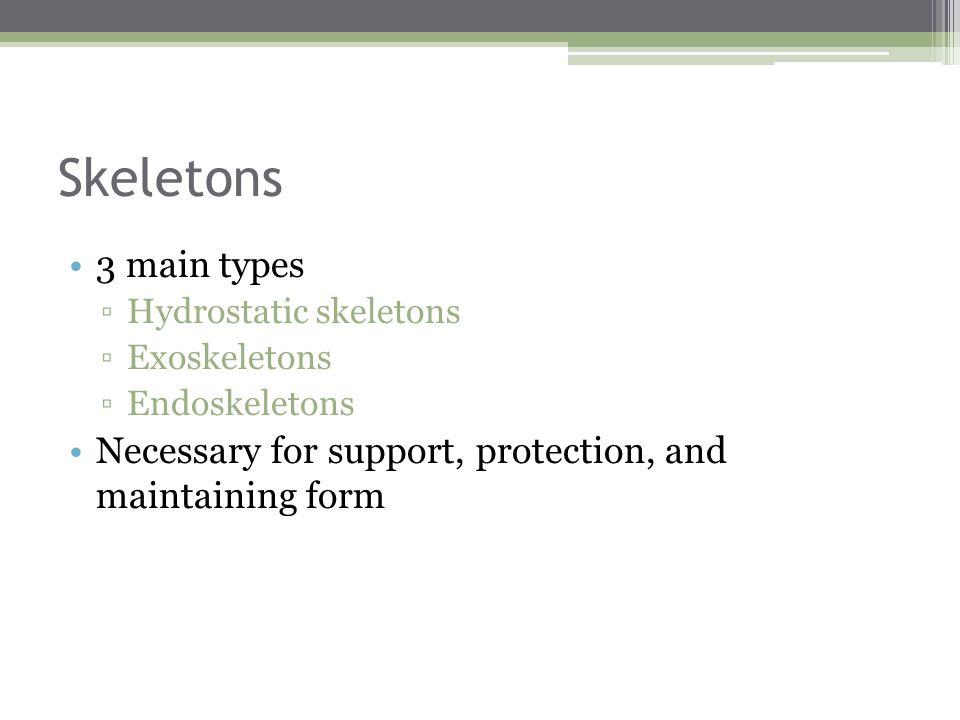 Skeletons 3 main types. Hydrostatic skeletons. Exoskeletons.