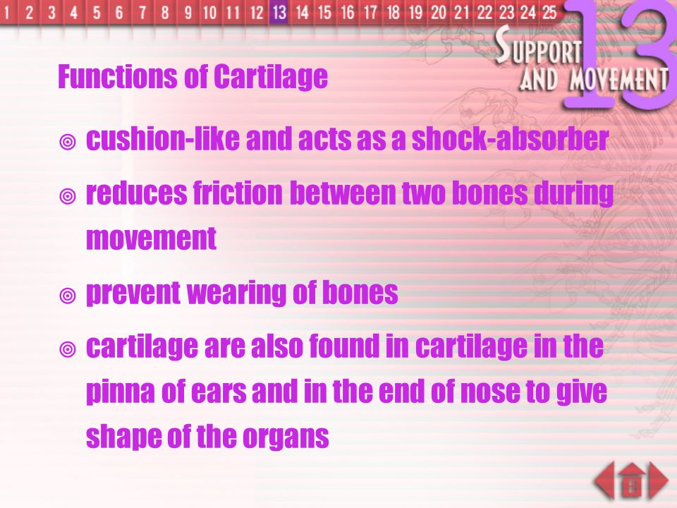 Functions of Cartilage