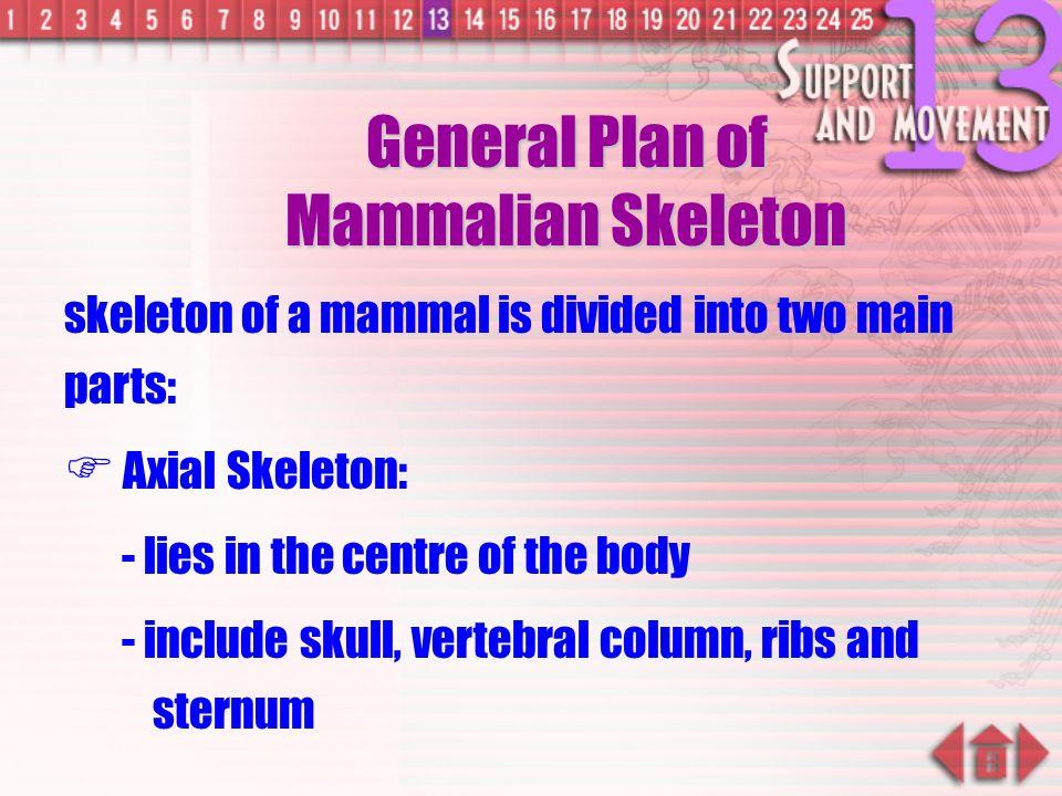 General Plan of Mammalian Skeleton