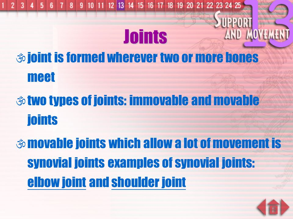 Joints joint is formed wherever two or more bones meet