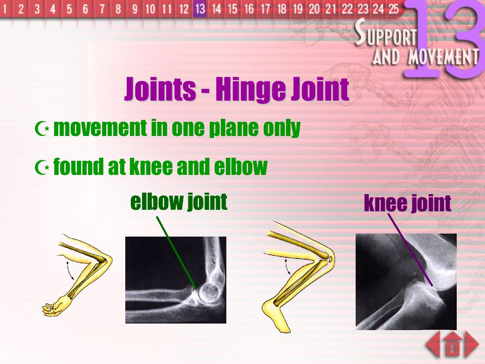 Joints - Hinge Joint movement in one plane only
