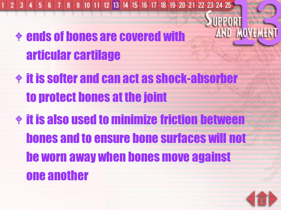 ends of bones are covered with articular cartilage