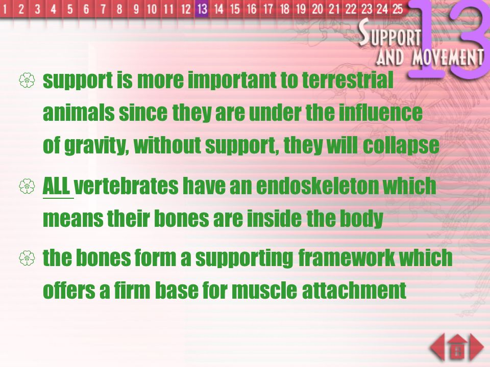 support is more important to terrestrial animals since they are under the influence of gravity, without support, they will collapse
