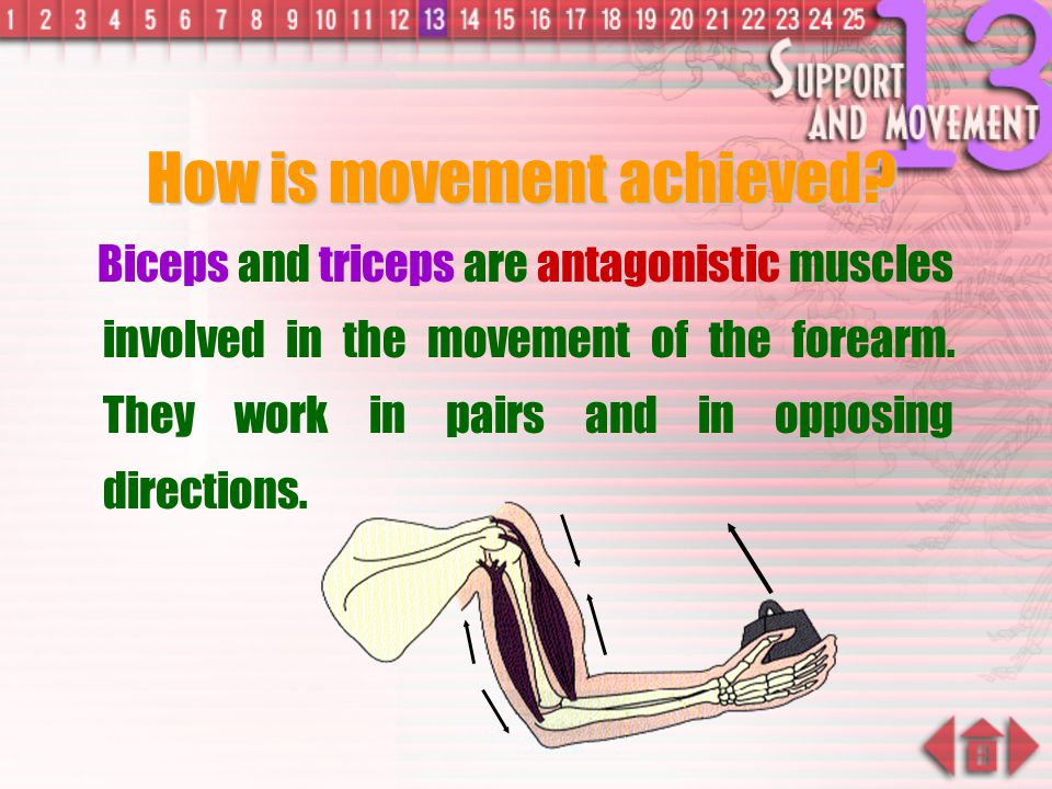 How is movement achieved