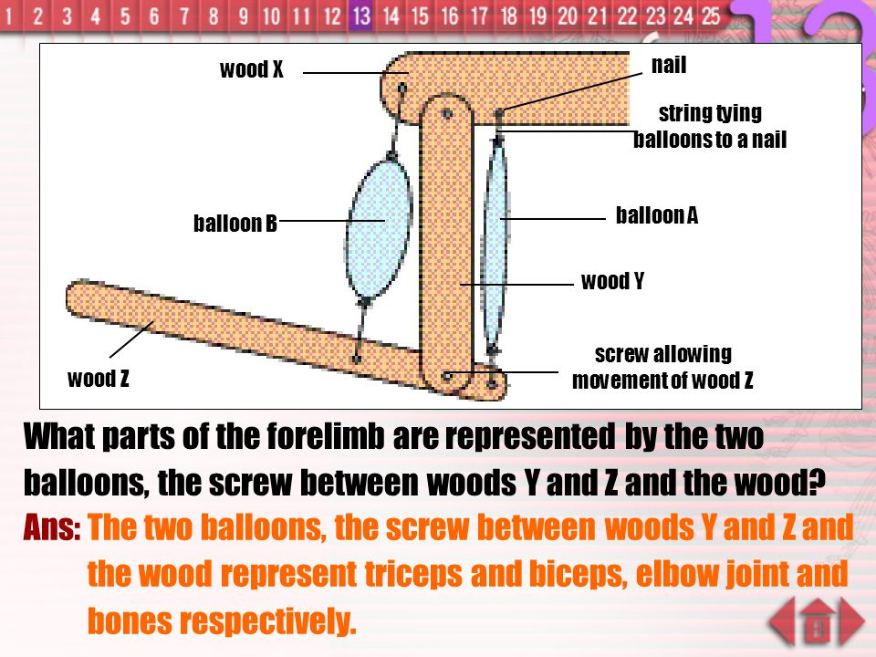 wood X wood Y. wood Z. balloon A. balloon B. nail. string tying balloons to a nail. screw allowing movement of wood Z.