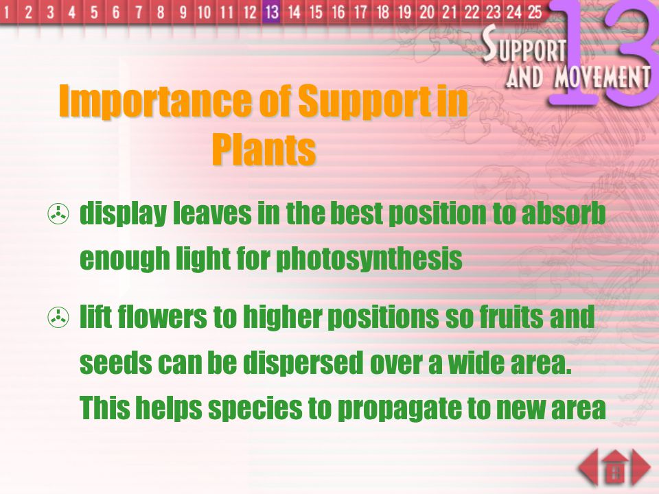 Importance of Support in Plants