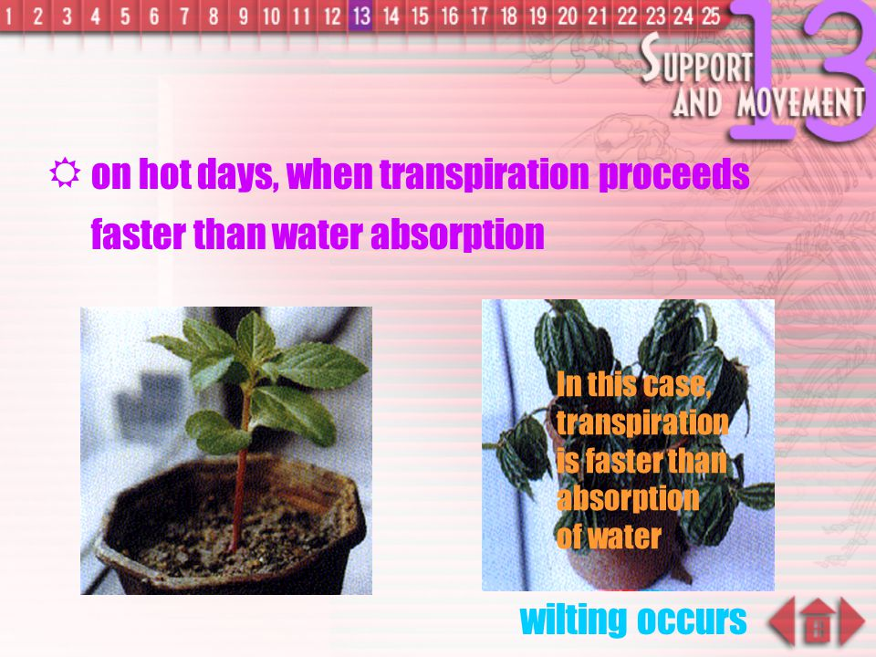 on hot days, when transpiration proceeds faster than water absorption