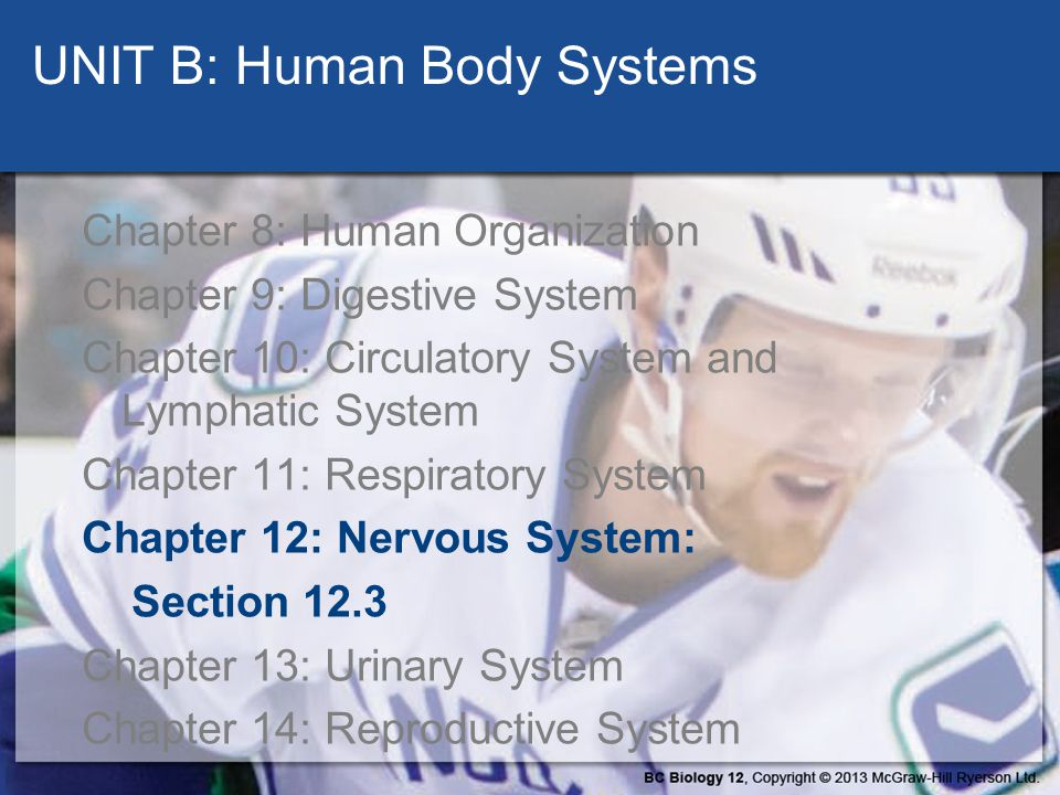 UNIT B: Human Body Systems
