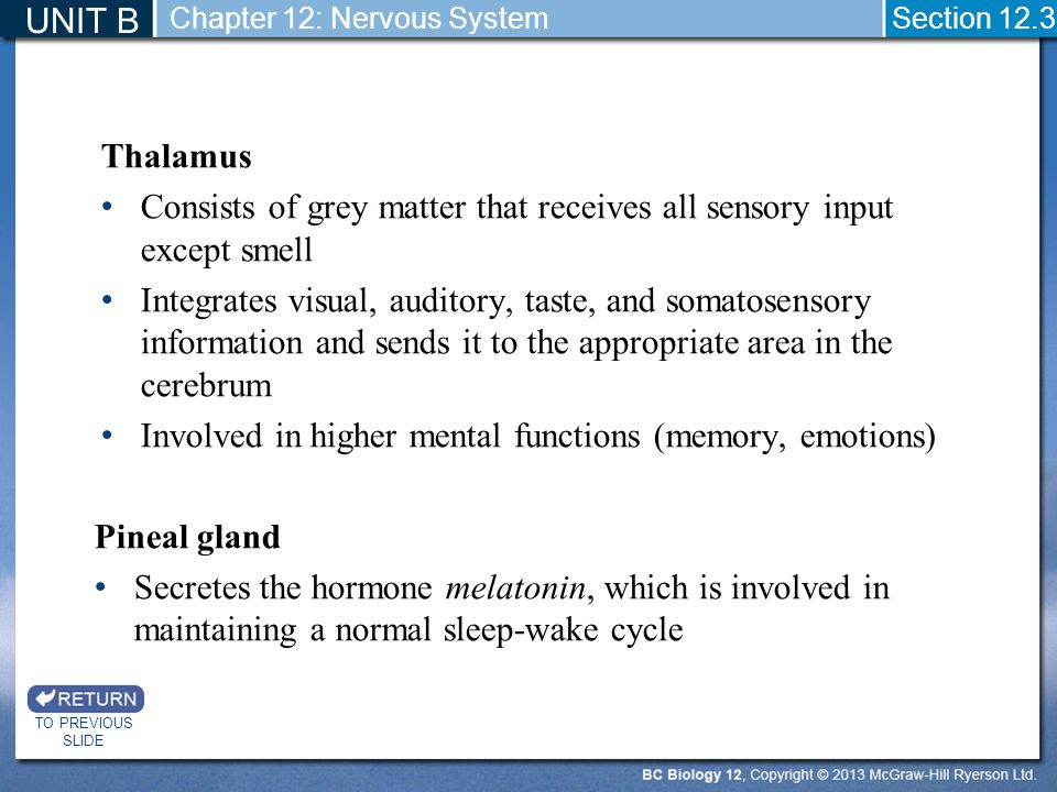 Consists of grey matter that receives all sensory input except smell