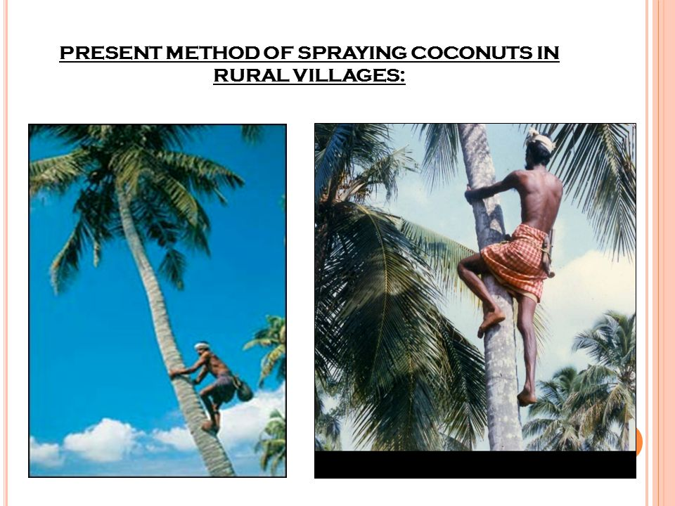 PRESENT METHOD OF SPRAYING COCONUTS IN RURAL VILLAGES: