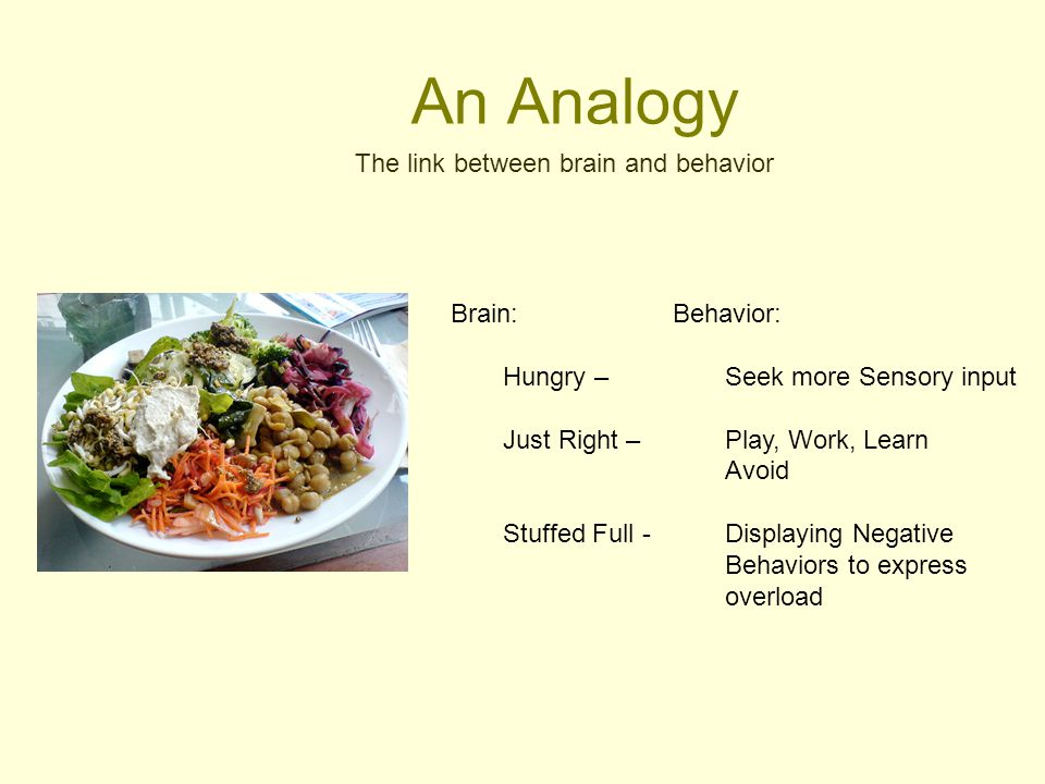 An Analogy The link between brain and behavior Brain: Hungry –