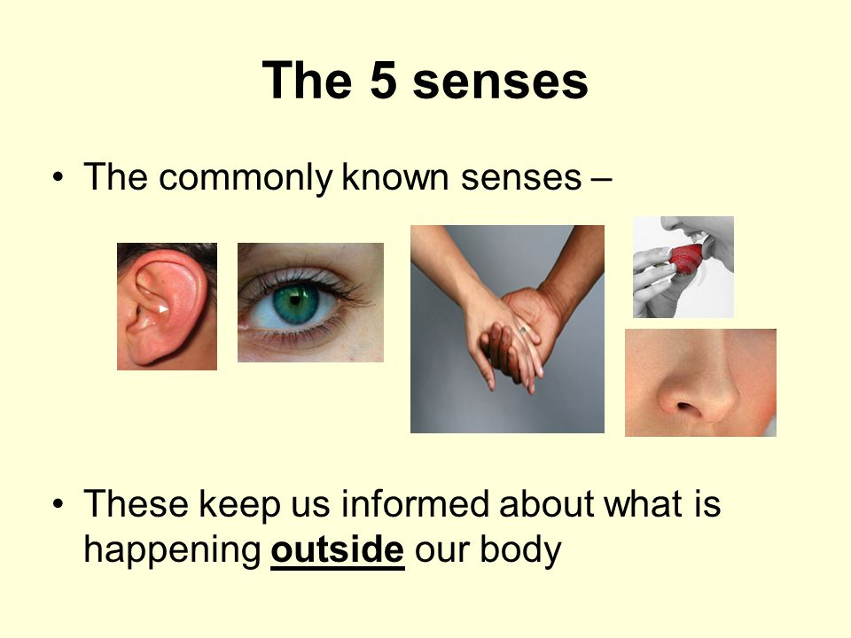 The 5 senses The commonly known senses –