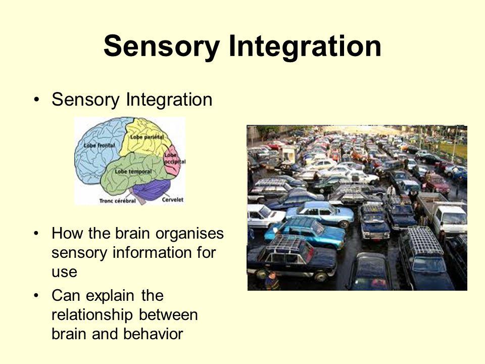 Sensory Integration Sensory Integration