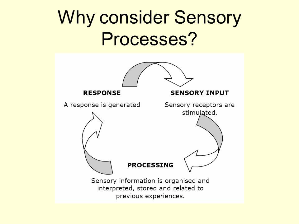 Why consider Sensory Processes