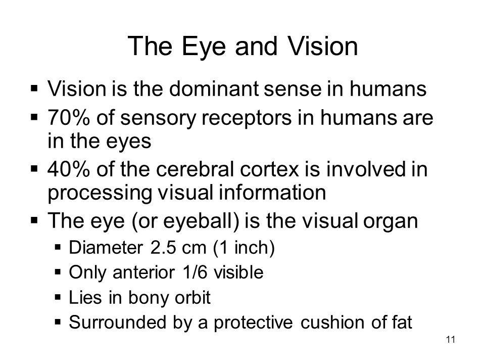 The Eye and Vision Vision is the dominant sense in humans
