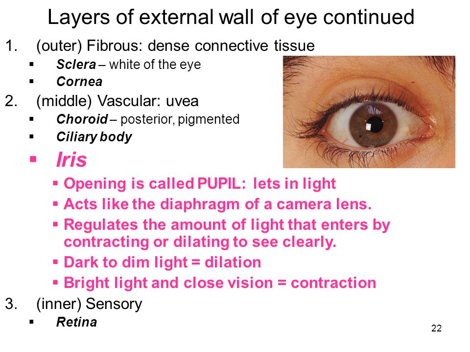 Layers of external wall of eye continued