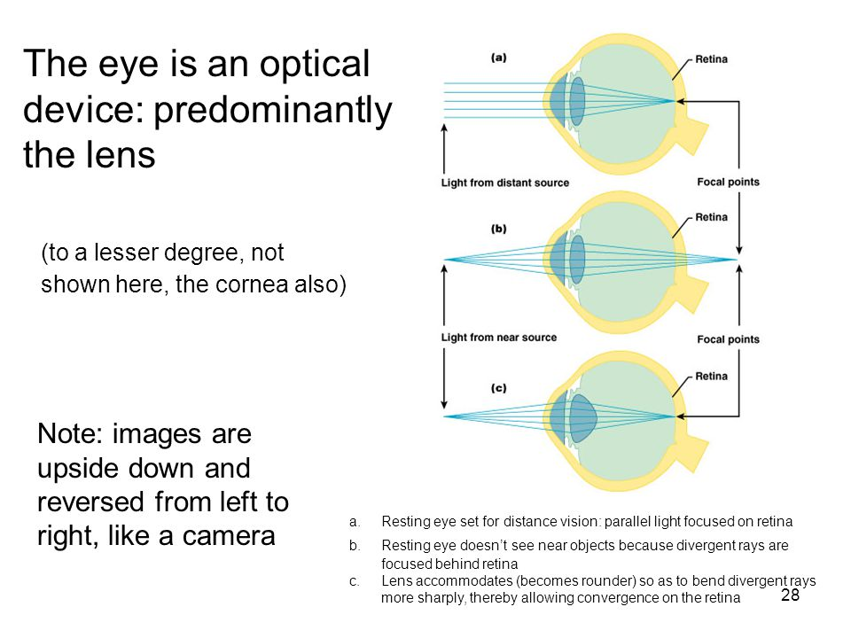 The eye is an optical device: predominantly the lens