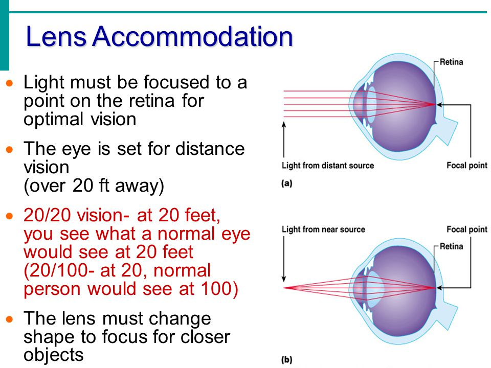 Lens Accommodation Light must be focused to a point on the retina for optimal vision. The eye is set for distance vision (over 20 ft away)