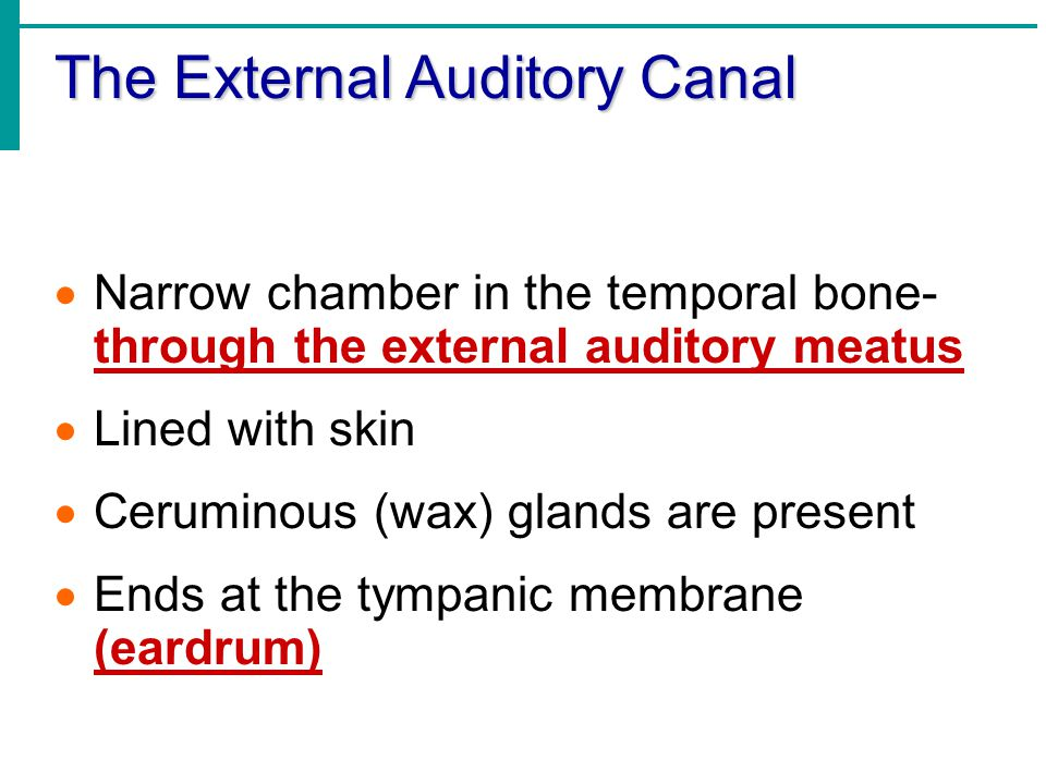 The External Auditory Canal