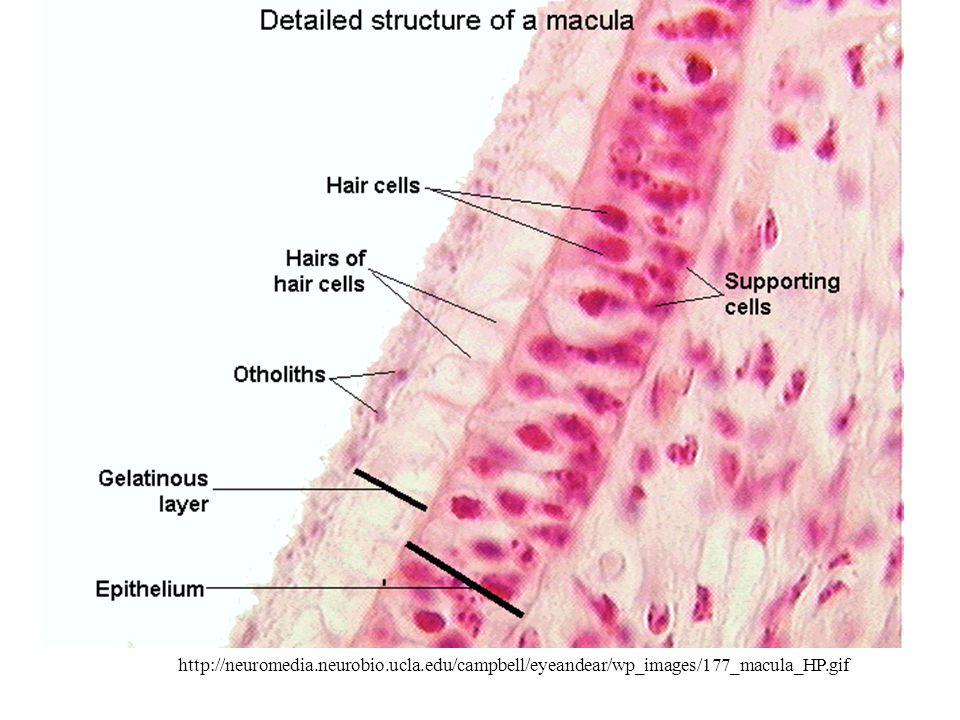 http://neuromedia. neurobio. ucla