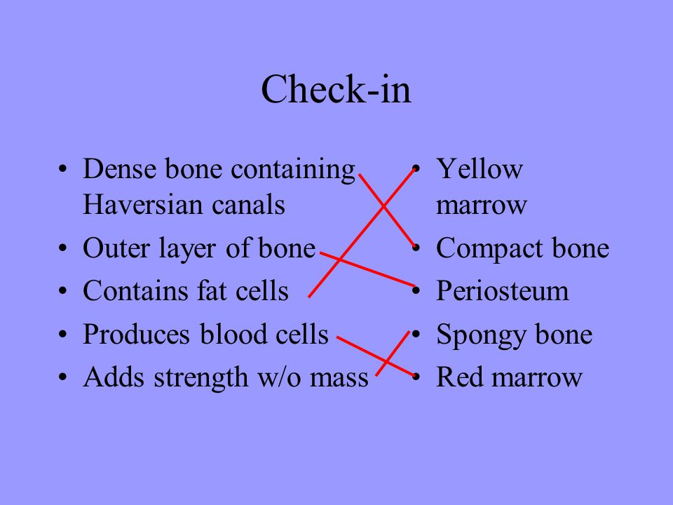 Check-in Dense bone containing Haversian canals Outer layer of bone