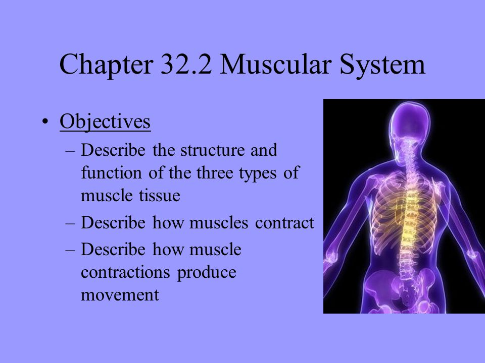 chapter 32 skeletal, muscular, and integumentary systems - ppt, Muscles