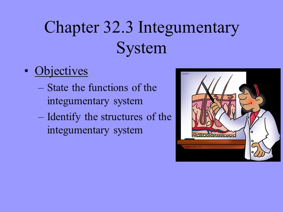 Chapter 32.3 Integumentary System
