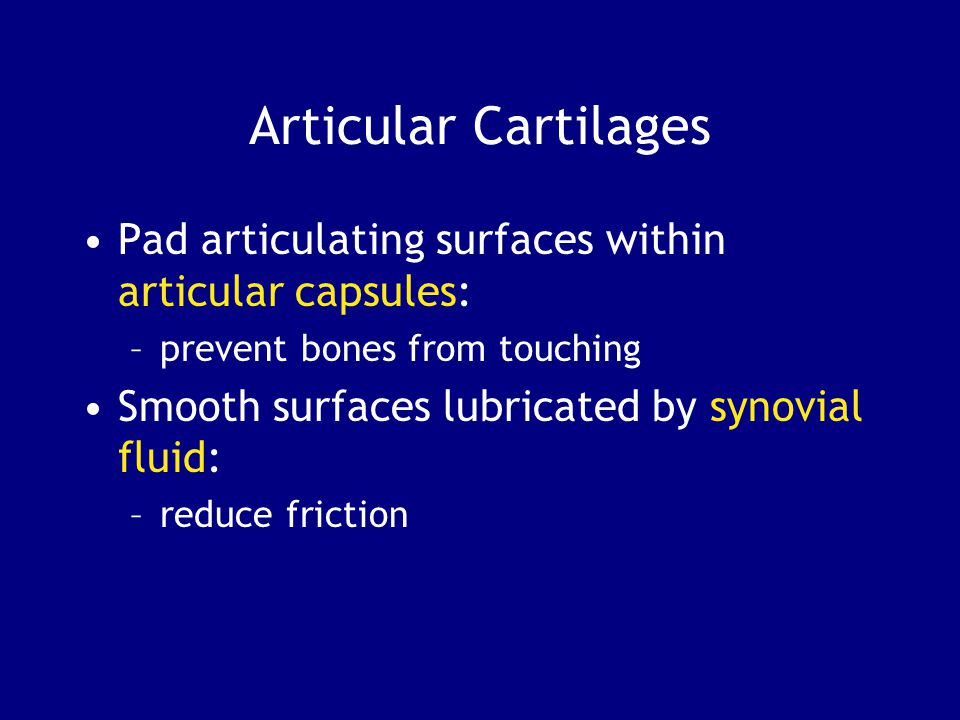 Articular Cartilages Pad articulating surfaces within articular capsules: prevent bones from touching.