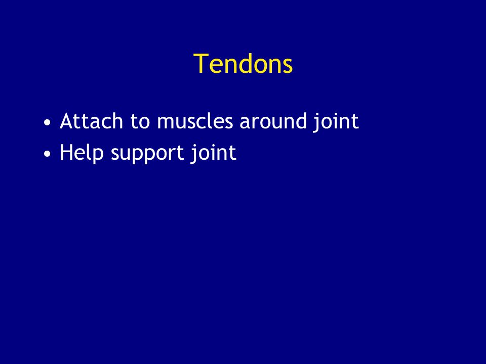 Tendons Attach to muscles around joint Help support joint