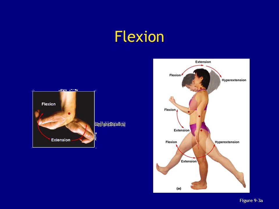 Flexion Figure 9–3a