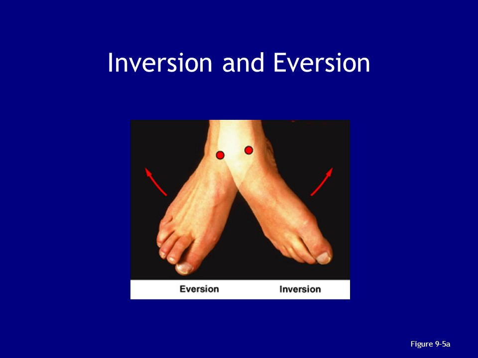 Inversion and Eversion