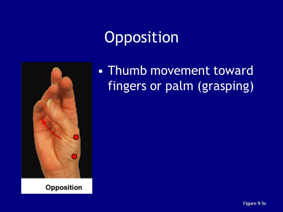 Opposition Thumb movement toward fingers or palm (grasping)
