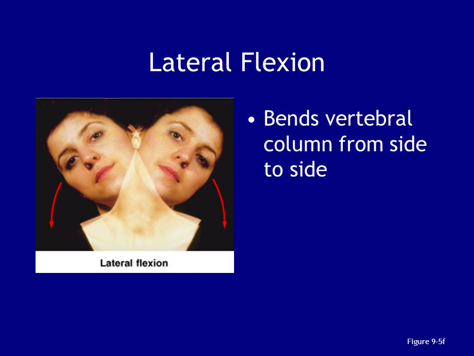 Lateral Flexion Bends vertebral column from side to side Figure 9–5f