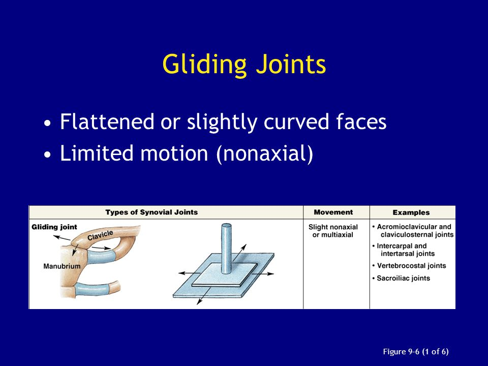 Gliding Joints Flattened or slightly curved faces