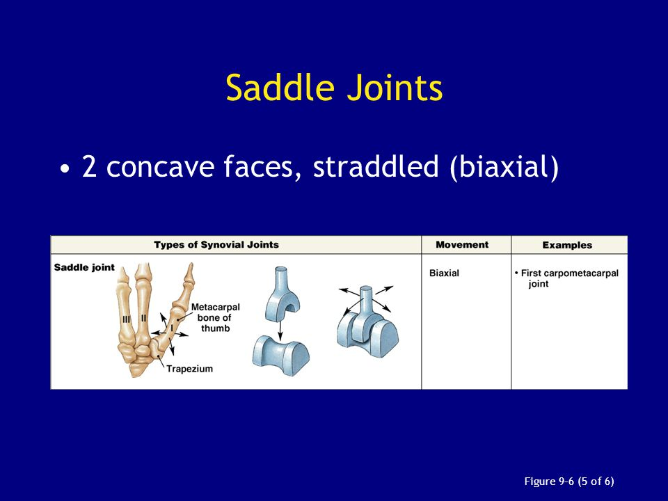 Saddle Joints 2 concave faces, straddled (biaxial) Figure 9–6 (5 of 6)