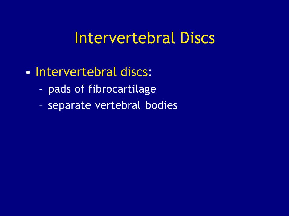 Intervertebral Discs Intervertebral discs: pads of fibrocartilage