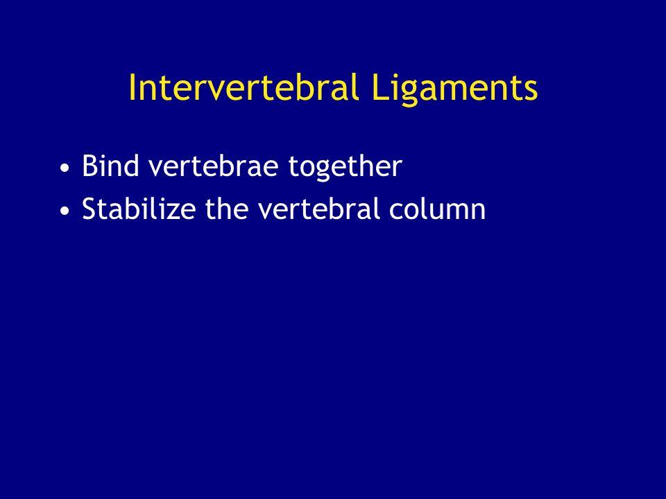 Intervertebral Ligaments