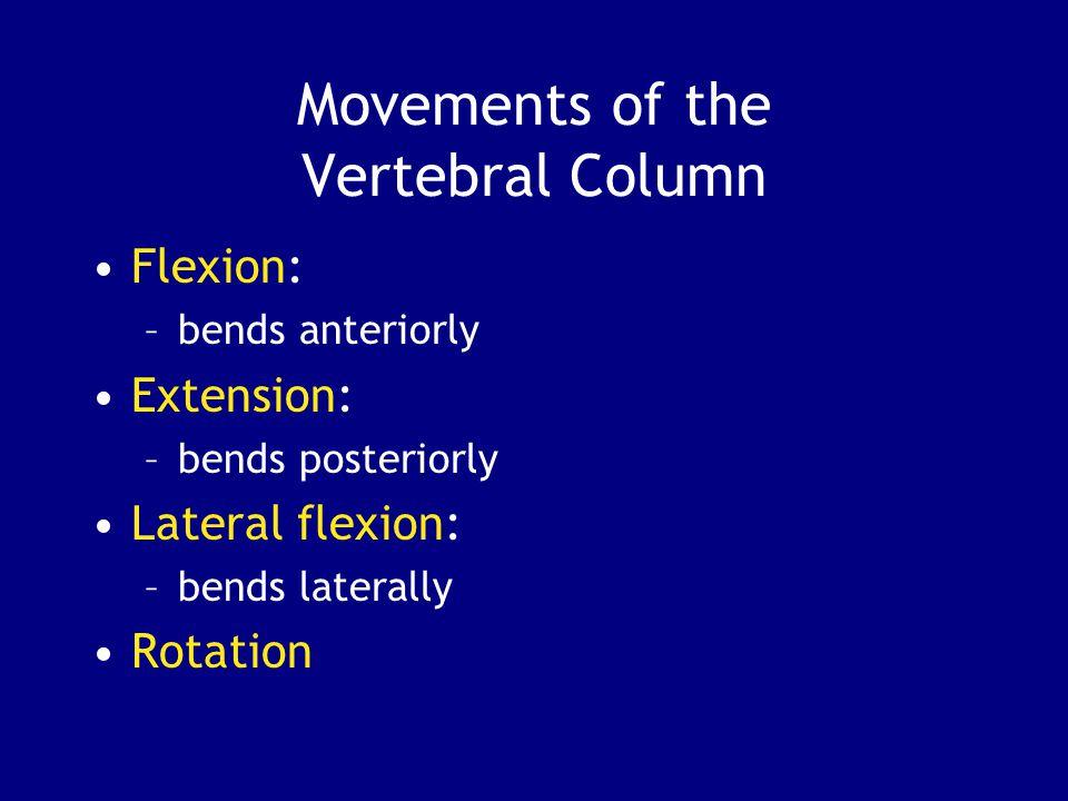 Movements of the Vertebral Column