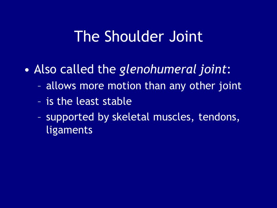 The Shoulder Joint Also called the glenohumeral joint: