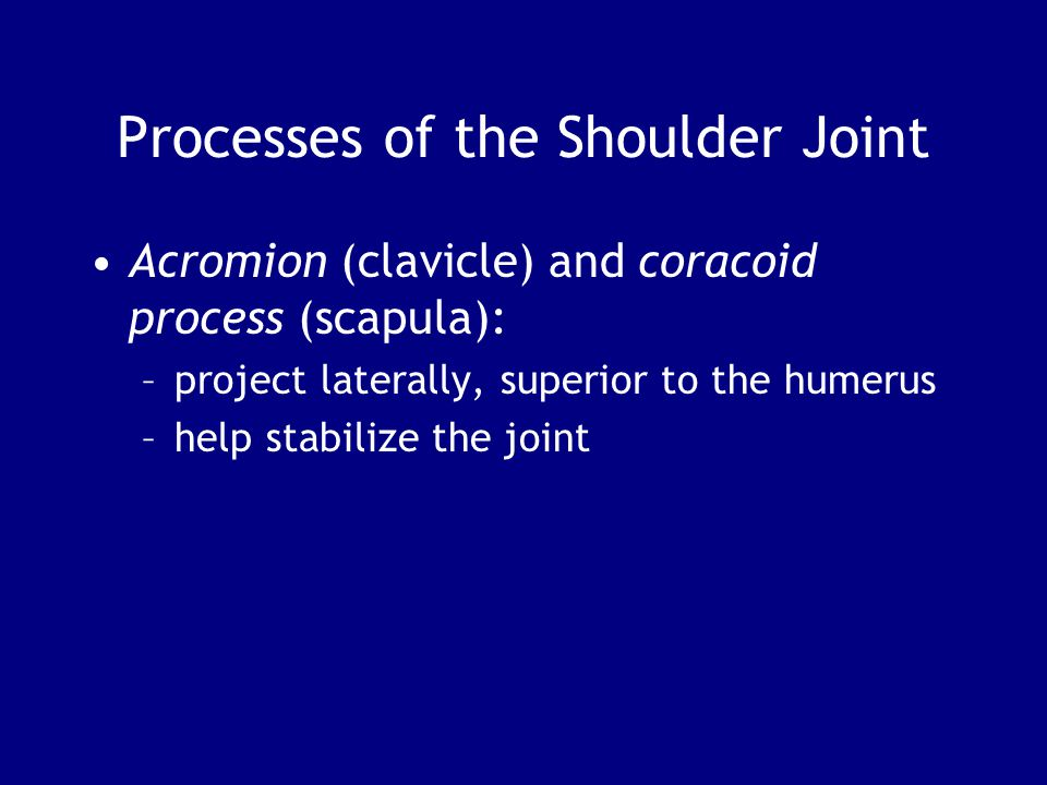 Processes of the Shoulder Joint