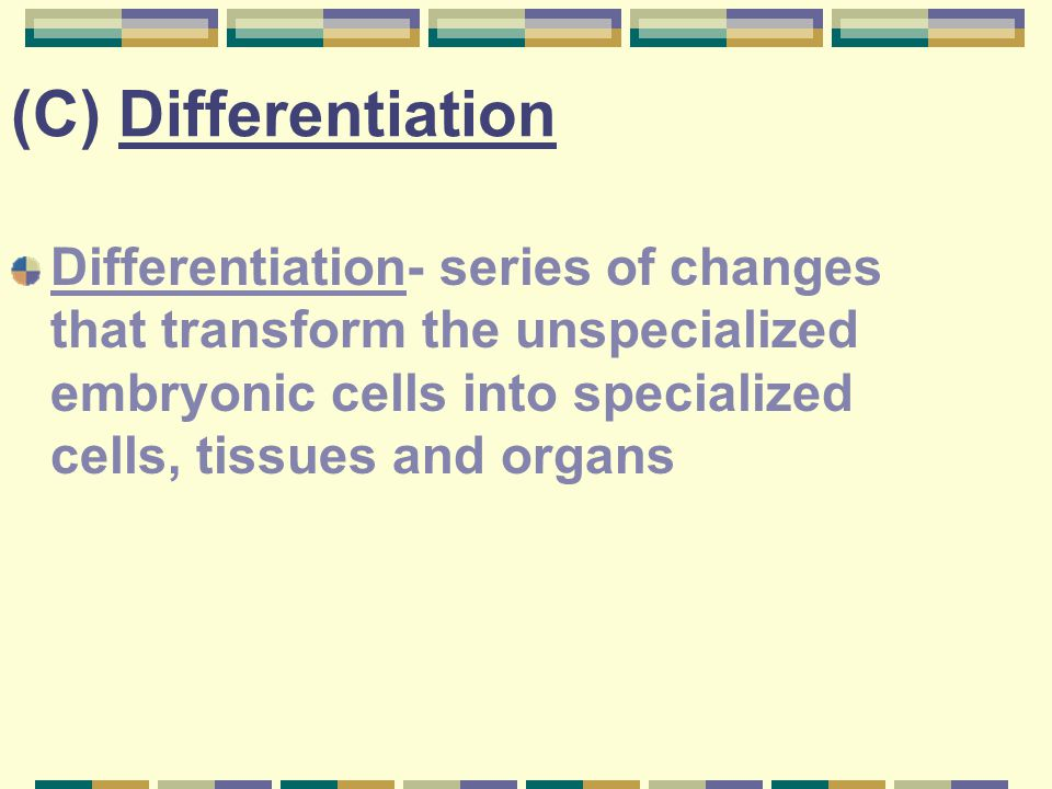 (C) Differentiation Differentiation- series of changes that transform the unspecialized embryonic cells into specialized cells, tissues and organs.