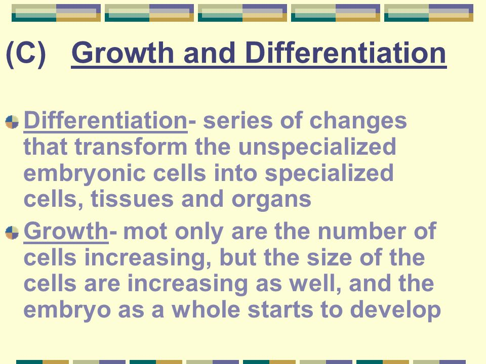 (C) Growth and Differentiation