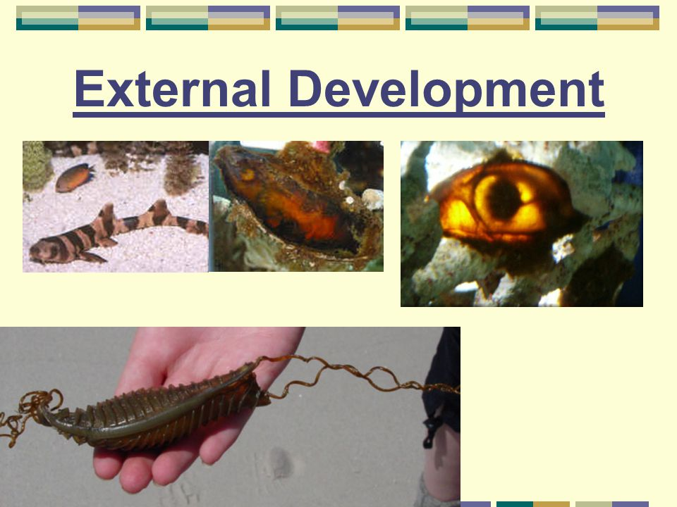 External Development