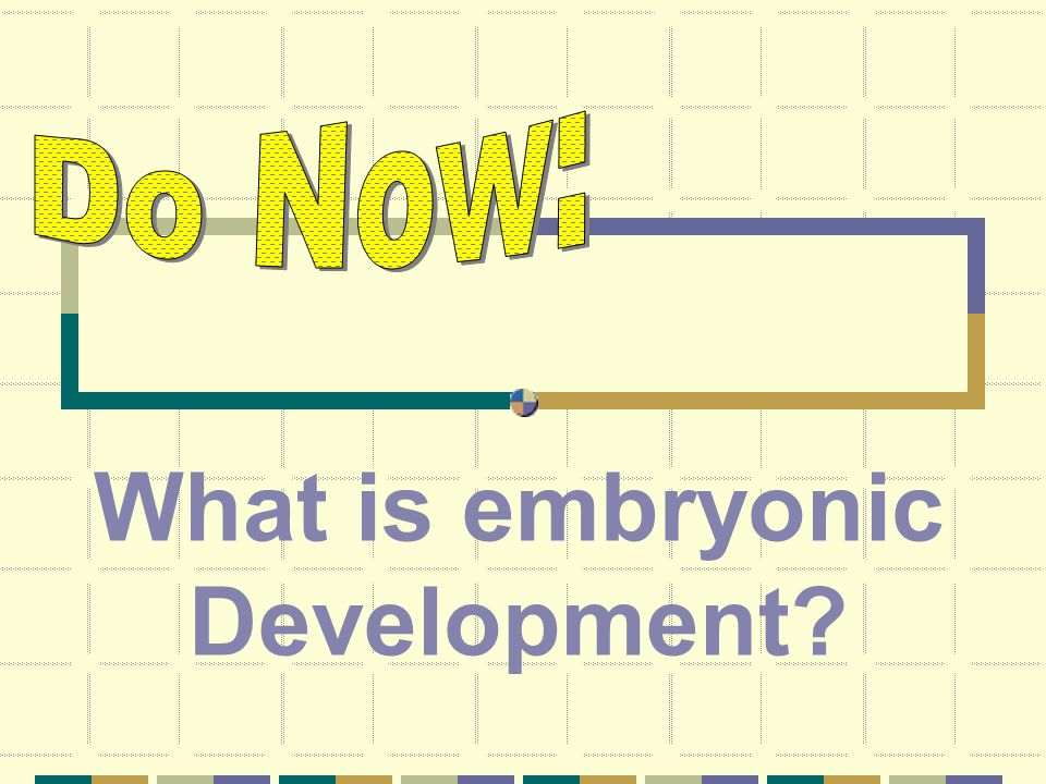 What is embryonic Development