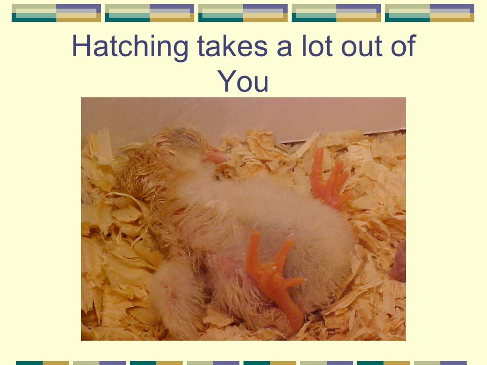Hatching takes a lot out of You