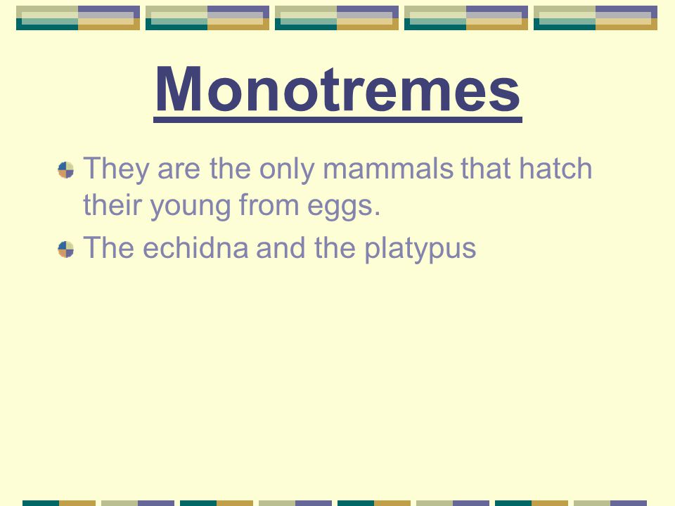 Monotremes They are the only mammals that hatch their young from eggs.
