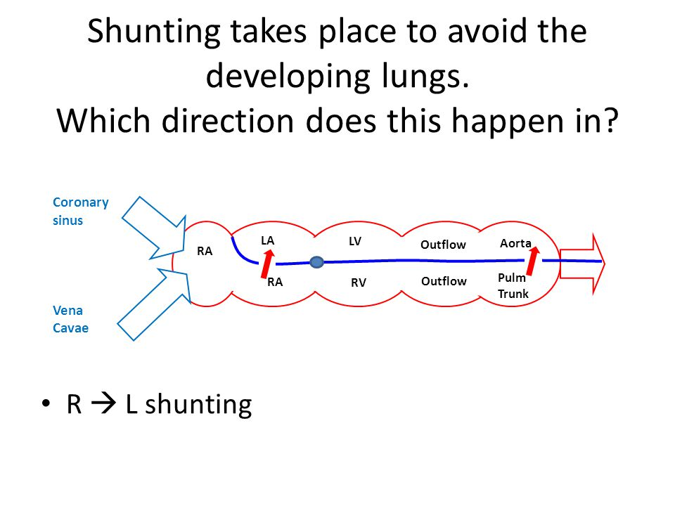 Shunting takes place to avoid the developing lungs