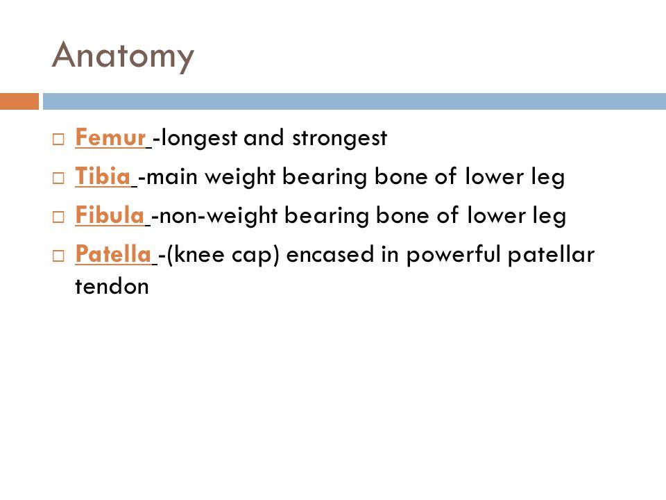 Anatomy Femur -longest and strongest