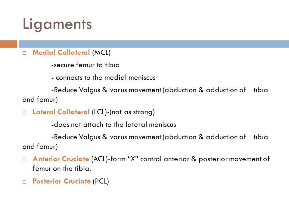 Ligaments Medial Collateral (MCL) -secure femur to tibia