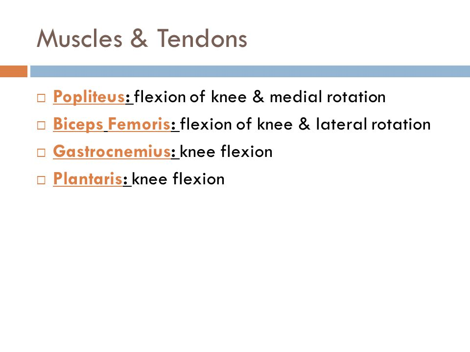 Muscles & Tendons Popliteus: flexion of knee & medial rotation